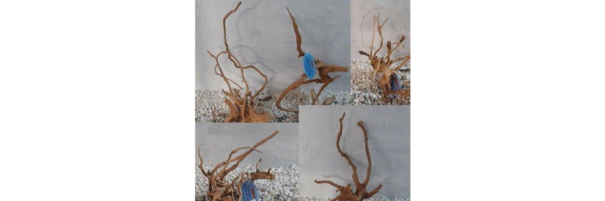 - Mangrovenwurzel