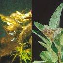 JBL Algol  zur Bekämpfung von Algen in...
