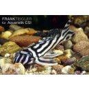L 046 Zebrawels Hypancistrus zebra