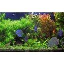 LED Aquarium Komplettsystem mit Lichtsteuerung Tagessimulation