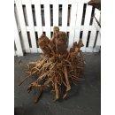 Moorwood Baumstumpf Wurzel XXL ca 60 x 60cm