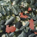 Hauptfutter für Malawifische 250ml Algenfresser